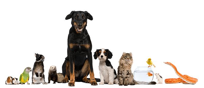 Cici Pet Market