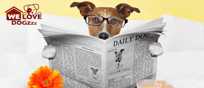We Love Dogzz Butik Kedi ve Köpek Oteli
